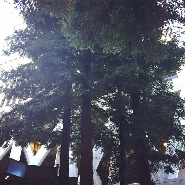 Sipping coffee among the Redwoods. Next to a giant pyramid. As we do in San Francisco. #sf #coffeebreak #uptooearly